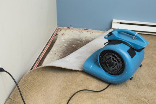 There Are Many Advantages to Ripping Up Your Carpet and Replacing it with Tile